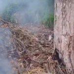 Setting waste on fire at Chamundi Hill poses threat, warns snake rescuer Suryakeerthi